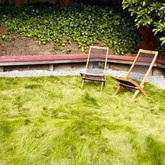 Low-water lawns