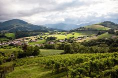 The Wines of Irouléguy, in French Basque Country - The New York Times