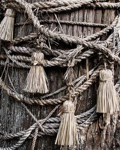 #Ropes Shimenawa (Japan) : the ropes that mark sacred space, can often be found wrapped around trees.