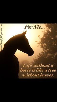 I love horses but, unfortunately, I cannot ride them but my sister gets to almost every day.