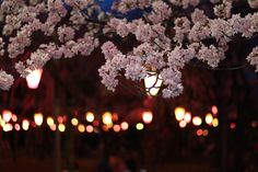 Sakura /w Light up | Flickr - Photo Sharing!