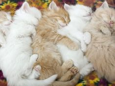 The cutest sleeping cats and kittens top 10 | Cats Around The Globe