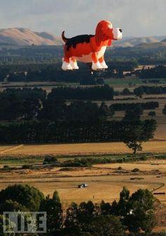#Dog #hotair balloon