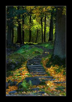 Forest Path, Ukraine - I love pathways Foto Nature, All Nature, Beautiful World, Beautiful Places, Forest Path, Forest Scenery, Walk In The Woods, Jolie Photo, Pathways
