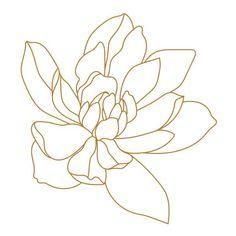 Flor Magnolia, Magnolia Flower, Illustration Blume, Botanical Illustration, Free Vector Graphics, Free Vector Art, Outline Drawings, Art Drawings, Outline Art