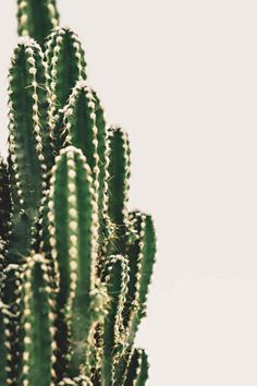 Looking for an easy care guide for your beloved Cactus plants?  Here's a step-by-step Cactus Care 101 Guide for Beginners! Gardening For Beginners, Gardening Tips, Indoor Gardening, Kinds Of Cactus, Natural Air Purifier, Cactus Care, House Plant Care, Top Soil, Grow Lights