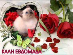 ΚΑΛΗ ΕΒΔΟΜΑΔΑ - YouTube Good Morning Picture, Morning Pictures, Teddy Bear, Cats, Animals, Youtube, Frames, Greek, Nice