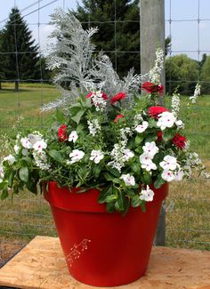 Silvers, reds and whites in a red pot. Add some cobalt blue lobelia for of July. Red And White Flowers, Red Flowers, Pretty Flowers, Container Flowers, Container Plants, Container Gardening, Graduation Flowers, Outdoor Landscaping, Landscaping Ideas