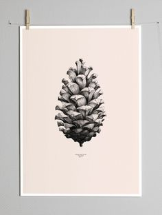 Image of a pinecone at 1:1 scale, by Form Us With Love (Sweden) | via Paper Collective