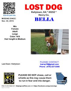 Lost Dog - Mix - Kellytown, GA, United States