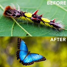 """The caterpillar must accept its own disappearance in its transformation. When the marvelous butterfly takes wing, nothing of the caterpillar remains.""  ― Alejandro Jodorowsky"