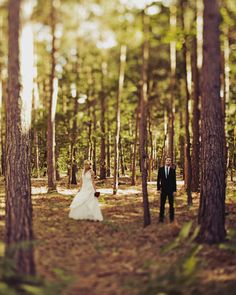 I love the idea of having pictures taken in the planted pines. I'm thinking it would work good for engagement photos, save the date and thank you photos!