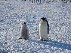 last penguin trip 10