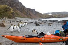 photo: SG2010, south georgia island, manchot, île georgie du sud, kayak en georgie du sud, kayaking in south georgia, penguin, emperor penguin, south georgia penguins