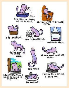 Kako žive mačke