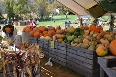 Grown in BaltCo: Rodgers Farms