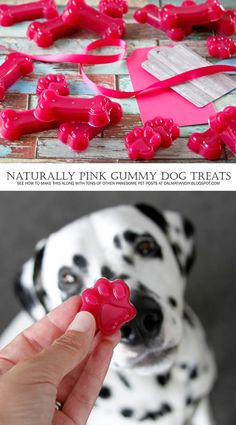 Easy Healthy DIY Valentine's Day Dog Treats - All Natural Hot Pink Valentine Gummy Dog Treats
