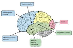 Brain function | Curtis Cripe | Image source: smartbrainsolutions.com