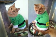 best-st-patricks-day-finds-for-pets-on-etsy
