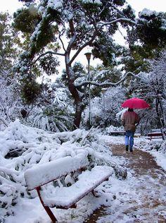 Love it!  Snowy day Photograph  - Snowy day Fine Art Print