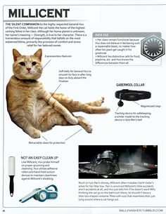 Lucasfilm's Pablo Hidalgo recently teased on Twitter that not only does The Force Awakens' General Hux have a cat named Millicent, but Millicent's litter box serves as place where Kylo Ren rests his helmet. Hidalgo hashtagged it #canon and everything.