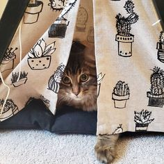 Love my little tent! Photo Dog & Teepee - more than just cat and dog bed. We've created a space that your fur babies will love calling home. We ship worldwide! Cat Teepee, Teepee Bed, Cactus Print, Take A Nap, Dog Bed, Fur Babies, Ship, Space, Pets
