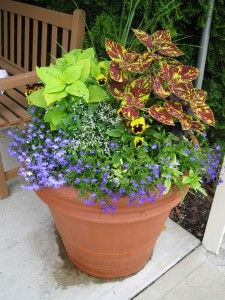 1000 images about garden in a pot on pinterest container garden container gardening and planters - Container gardens for shade ...