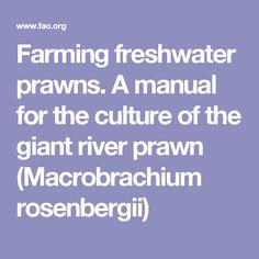 Farming freshwater prawns. A manual for the culture of the giant river prawn (Macrobrachium rosenbergii)