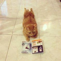 置いていくつもりの飼い猫がついて行く気マンマンで家族旅行のパンフレットを読んでいる。 どうしたものか。 pic.twitter.com/cD6c44o6cx