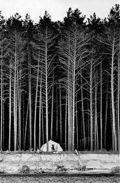 Black and white high contrast forest