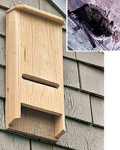 Bat House - Bat Box - Bat-Chelor Pad | Gardener's Supply