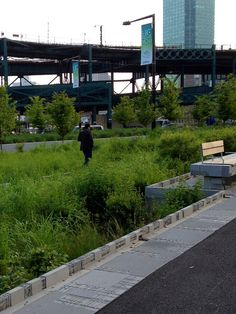Bioswale in Queens Plaza, NYC. Click image for details and visit the Slow Ottawa 'Streets for Everyone' board for more smart urbanism.