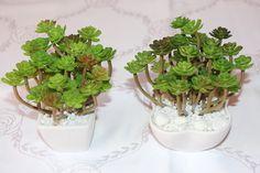 Mini Vasinho com cacto artificial pode ser usado na decoração ou como lenbrancinhas R$ 25,00