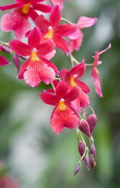 Orquídeas en Wisley de Christina Burrows