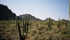 1. A drive through the Organ Pipe Cactus National Monument on State Route 85 is worth the trip for a rich mixture of desert flora.