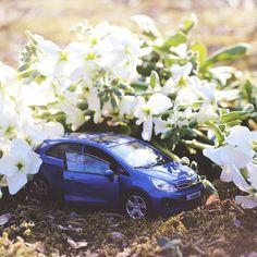 #기아자동차 #프라이드 #다이캐스트 와 함께 #봄맞이 를 해요  Let's #welcome #spring with #KIA #motors #PRIDE ( #Rio ) #diecast    #car #blue #white #toy #flower #stock #gypsohila #daily #date #봄 #스톡크 #안개꽃 #꽃 #입춘 #데이트 #힐링 #장난감 #자동차그램 #소소잼