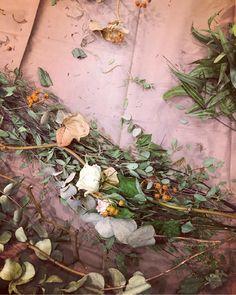 B.ird.Mさんが投稿した画像です。他のB.ird.Mさんの画像も見てませんか?|おすすめの観葉植物や花の名前、ガーデニング雑貨が見つかる!🍀GreenSnap(グリーンスナップ)