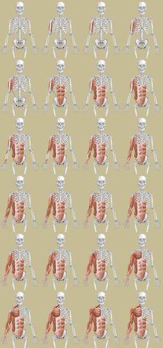 デッサンセミナー『美術解剖学から見えてくる骨格と筋肉のしくみ』