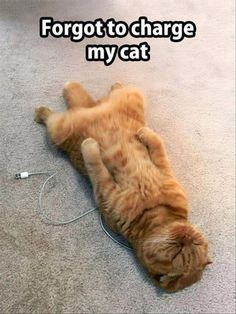 Funny Animal Pictures 28 Pics - Funny Animal Quotes - - Funny Animal Pictures 28 Pics The post Funny Animal Pictures 28 Pics appeared first on Gag Dad. Best Cat Memes, Funny Animal Memes, Cute Funny Animals, Funny Animal Pictures, Funny Cat Pics, Cat Memes Hilarious, Cute Cat Memes, Animal Funnies, Funny Humor