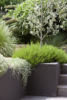 Peter Fudge creates gardens that connect in deep and meaningful ways. Peter has been designing beautiful gardens since Every garden design has… Australian Garden Design, Australian Native Garden, Modern Landscaping, Landscaping Plants, Small Gardens, Outdoor Gardens, Dry Garden, Contemporary Garden, Garden Inspiration