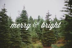 jamiecorder: (via vanilla lace: Oh Tannenbaum) 25 days of Christmas // 9 Christmas Time Is Here, Christmas Tree Farm, Merry Little Christmas, Christmas Love, All Things Christmas, Christmas And New Year, Winter Christmas, Winter Holidays, Xmas