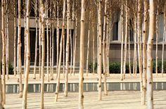 Novartis Headquarters, Forum 1 Courtyard   PWP Landscape Architecture