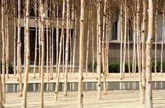 Novartis Headquarters, Forum 1 Courtyard by PWP Landscape Architecture
