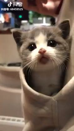 so here iz some kittens (Gallery) It iz Monday. so here iz some kittens (Gallery) It iz Monday. so here iz some kittens (Gallery) Cute Baby Cats, Cute Little Animals, Cute Cats And Kittens, Cute Funny Animals, Kittens Cutest, Funny Cats, Cute Dogs, Cute Babies, Sad Cat Meme
