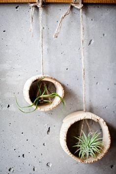 "We can easily play with clay and make air plant holders! _________________________________ these air plant ""vessels"" are just slab-rolled pieces of clay and twine! I am so making these. Hanging Plants, Indoor Plants, Indoor Herbs, Garden Art, Garden Plants, Garden Nook, Moss Garden, Plantas Indoor, Cacti And Succulents"
