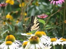 Keep weeds down, color high and maintenance low with beautful plants that sow themselves