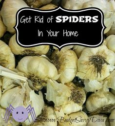 Get Rid of Spiders in Your Home - There are several scents that repel spiders, such as garlic, peppermint or spearmint. So grab a spray bottle filled with water and add either a crushed clove of garlic or several drops of peppermint or spearmint essential oils. Shake the bottle well and then spray in the areas you frequently see spiders.