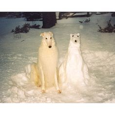 snow dog and dog