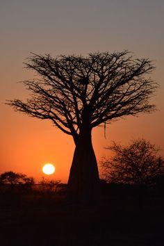 A beautiful sunset in Botswana!