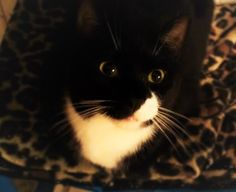 Nina-https://www.facebook.com/Independent-Cat-Society-Nooks-Page-137574286333086/?fref=ts